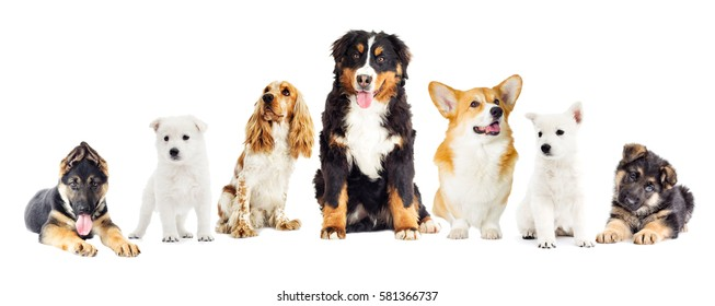 dogs set on a white background