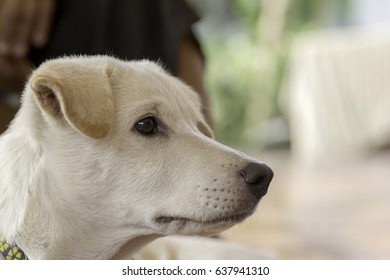 Dog's side face Close-up