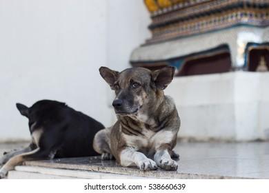 Dogs sitting on church