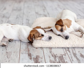 Dogs sleeping at floor. Pet on dogs bed