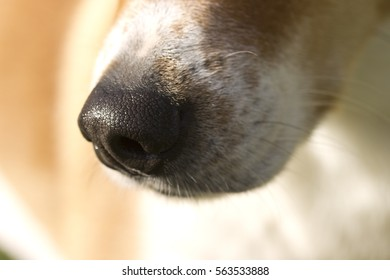 Dogs Sniffing Nose
