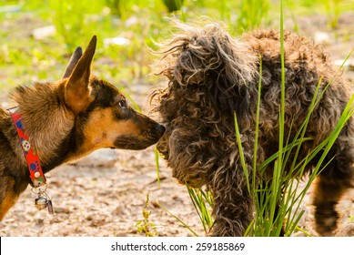 Dogs sniffing other dogs butts