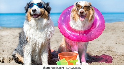 Dogs standing on the beach in france..jpg