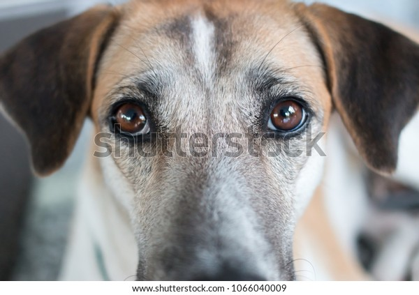 Dogs stare at you