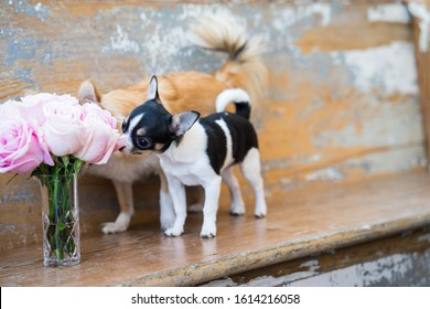 Dogs stopping to smell the roses