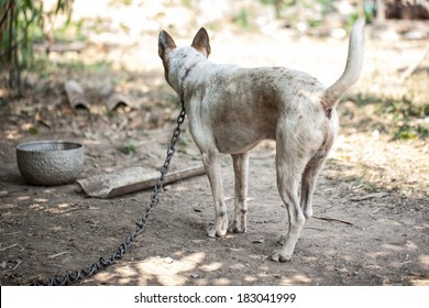 Dogs that are chained