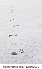 dog's tracks in the snow