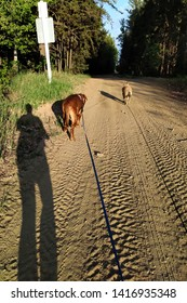 dogs walking on trail in forest