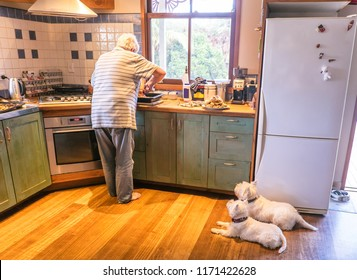 Dogs watching retired owner cooking roast meal for Sunday lunch in kitchen at home - authentic domestic scene