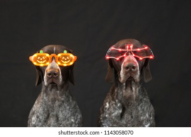Dogs wearing Halloween Glasses