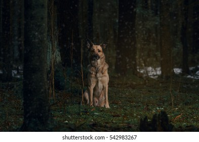 dogs in the wood sit, winter
