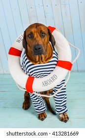 Dog-sailor with lifebuoy begging for help