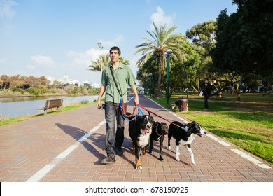 A dogwalker spending time with three dogs in an urban park on a sunny day.