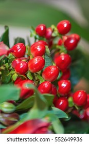 A dogwood berries. close up.