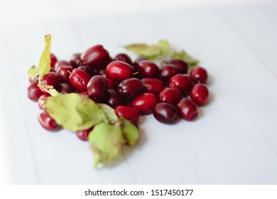 Dogwood is a red berry, useful for health and rich in vitamins. Dogwood on white background with space for text. The concept of healthy and proper nutrition.