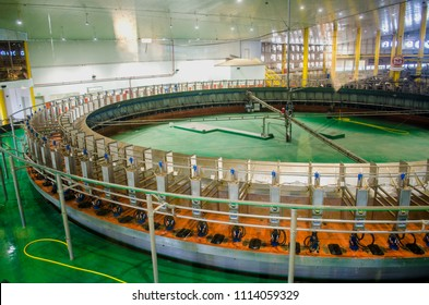 DOHA, QATAR - JUNE 16, 2018: Baladna Farm, Qatari farm with the largest food industries available in GCC and the Middle East at Al Khor, Qatar, Middle-East.