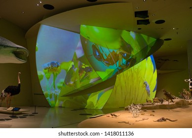 DOHA, QATAR - MAY 2019:The interior of the National Museum of Qatar, projection installations about nature on the Earth