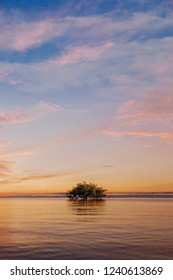 Doha, Qatar, Nov 09, 2017 : Long exposure seascape of mangrove Single tree. islet viewed from the water surface