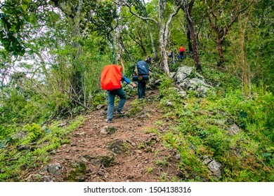 Doi Luang Tak, Tak Province, Thailand. AUGUST 31,2019: Hikers are trekking to the rain forest at Doi Luang Tak