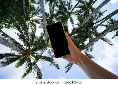 doing selfie with the sell phone under the palm trees.
