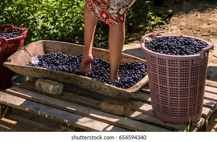 Doing wine ritual,Female feet crushing ripe grapes in a bucket to make wine after harvesting grapes