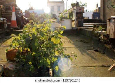 London city farm images stock photos vectors shutterstock a do it yourself urban rooftop garden in london with planting beds made out solutioingenieria Gallery