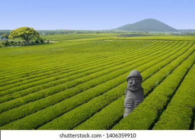 Dol hareubang Jeju sculpture statue in green Tea fields in Jeju Island, South Korea