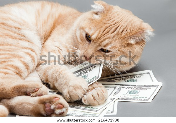 Dollar and a cat
