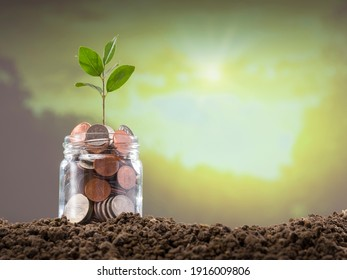 Dollar coins and young plant in glass hive. Growth and savings concept