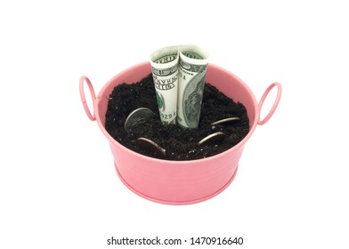 Dollars and coins are planted in a pink bucket on a white background. Money tree close-up on a white background. How to attract money to the house.