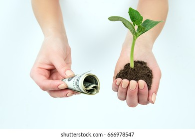 Dollars and a seedling in hands isolated