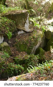 dolmen stones covered by moss and fern in a forest