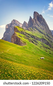Dolomites Alps in summer, green grass, flowers and Seceda Mount Peak in background. Trentino Alto Adige, Italy