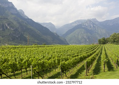 The Dolomites can be seen in Trento, north of Italy. Wine production is one of the main industries in this area.