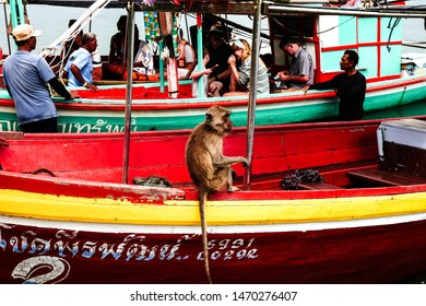 Dolphin Bay / Thailand - June 30th 2019 :A picture of a local tourist spot in southern Thailand known as monkey Island. This is a close up of one of the residents.