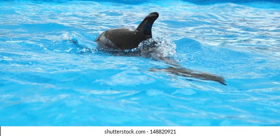 Dolphin in the clear water