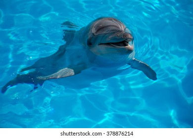 dolphin close up portrait while looking at you while smiling.