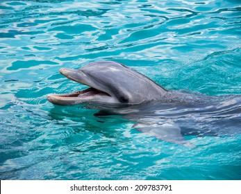 dolphin close ups