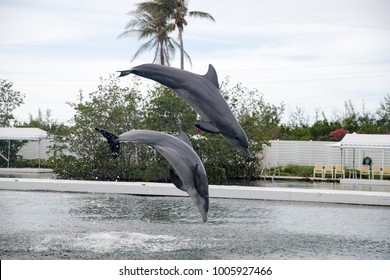 Dolphin during show in Miami