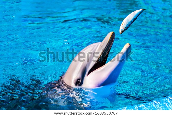 Dolphin eat fish in water. Dolphin in water. Dolphin smile in water