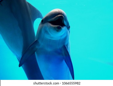 The dolphin is a family of suborder of toothed whales of a group of cetaceans of the mammal class