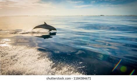 Dolphin following fishing boat