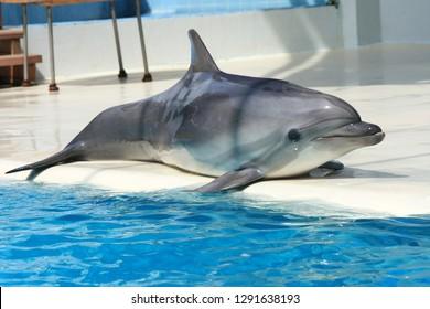 Dolphin in a fun show in an aquarium