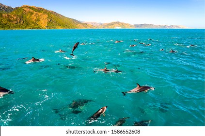 Dolphin group swimming and jumping in ocean