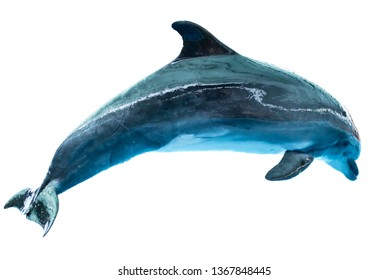 Dolphin isolated on white background.