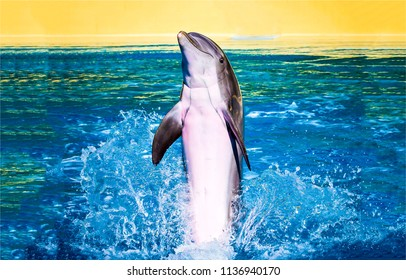Dolphin jump in water. Cute dolphin jumping. Dolphin portrait