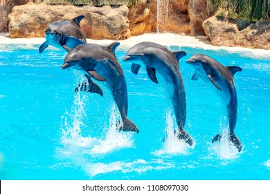 Dolphin jumping above blue water