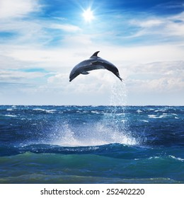 Dolphin Jumping From Open Water in Sea Under Blue Cloudy Sky With Bright Sun