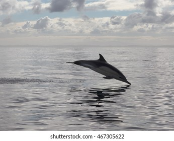 Dolphin is jumping out of the ocean