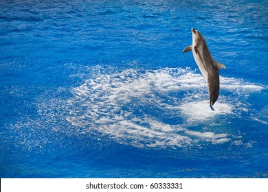 dolphin jumping out of water